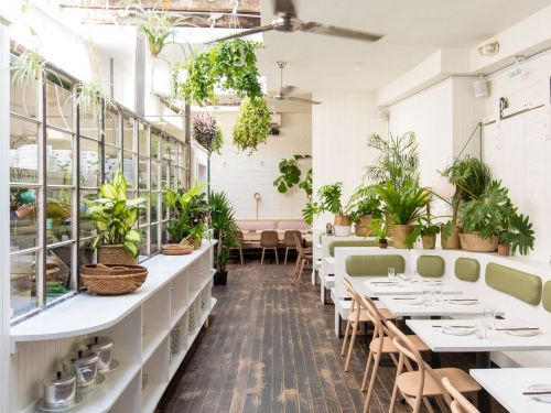 We Need to Talk About Dead Houseplants in Restaurants
