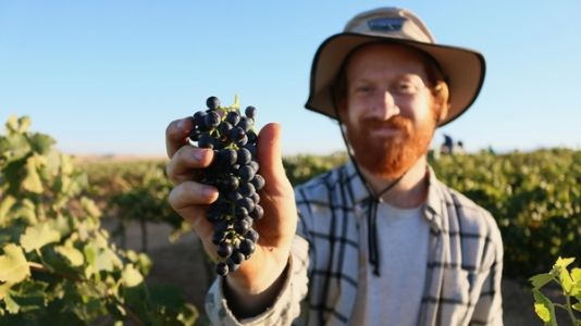 Why Some Wineries Are Becoming 'Certified B Corp' - And What That Means
