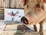"""Holy Crap - There's a Pig Called """"Pigasso"""" Who Paints With His Mouth"""