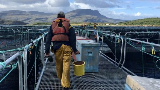 Scotland's $2 Billion Salmon Industry Is Thriving - But At What Cost?