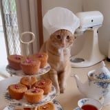 I Could Watch Videos of This Cat Baking in a Mini Chef's Hat All Day Long