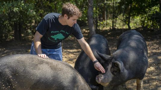 Illinois Farmers Put Rare Pig Back On Dinner Table To Save It From Extinction
