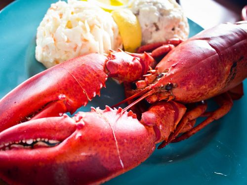 A Maine Restaurant Wants to Kill Lobsters Humanely by Getting Them Stoned
