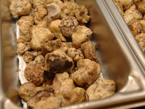 White Truffle Prices Are Shockingly Low This Year