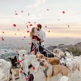 1 Man Proposed to His Girlfriend With the Help of 16 Dogs, and Our Newsroom Is Collectively Shrieking