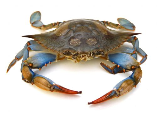Justice Department Finds $4 Million Worth of 'American' Crab Is Actually Imported
