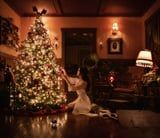 """The """"Halloween Queen"""" Decorated Her Christmas Tree, and the Sparkling Result Will Transfix You"""