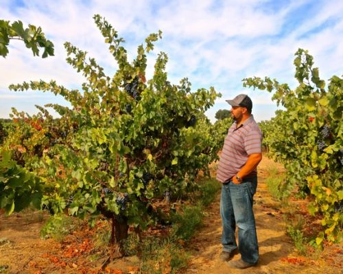 Holman Cellars pays homage to Lodi vineyards with natural style wines