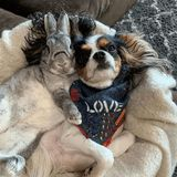 We Are Currently Very Obsessed With This Dog Who Can't Get Enough of His BFF - a Bunny