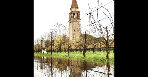 Venice's Island Vineyard Venissa Tries to Save Rare Grapes After Floods