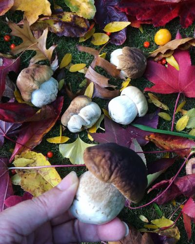 Christchurch in Autumn, and foraging fungi
