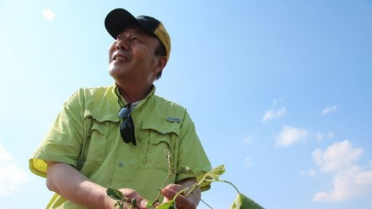 Rogue Weedkiller Vapors Are Threatening Soybean Science