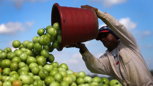 Food Fight: Trump Administration Levels Tariffs On Mexican Tomatoes