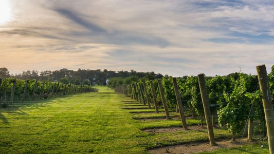 With Critically Lauded Bottles, New Jersey Wine Is Coming Into Its Own