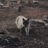 A Woman Reunited With Her Cat at the Site of Her Burned Down House and the Video Has Unraveled Me