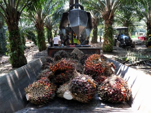 Your Favorite Products Could Be Made With Palm Oil Produced by Slave Labor