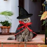 If You Think I'm Not Dressing My Cat Up in 1 of These Halloween Costumes, You Are Sorely Mistaken