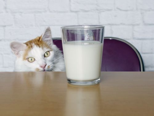 The Impeachment Trial Is Brought to You by Milk
