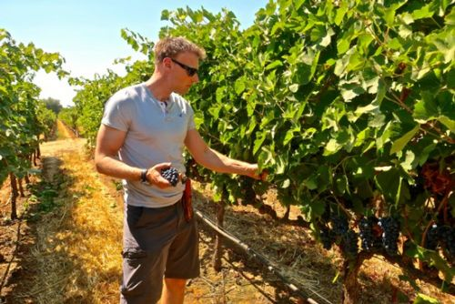 Markus Wine Co.'s Markus Niggli approaches grapes like colors on a palette