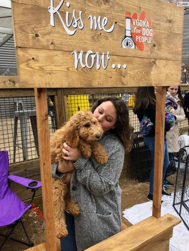 Fall in Puppy Love at MUTTS Canine Cantina