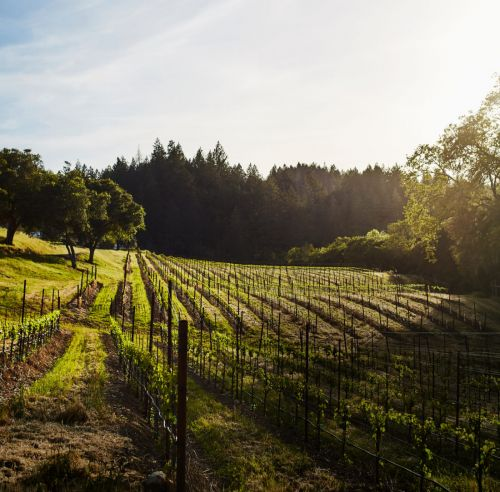 How to Spend 24 Hours in Napa