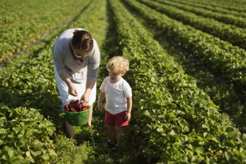 Strawberry Picking with Your Kids Is Always Worth the Time