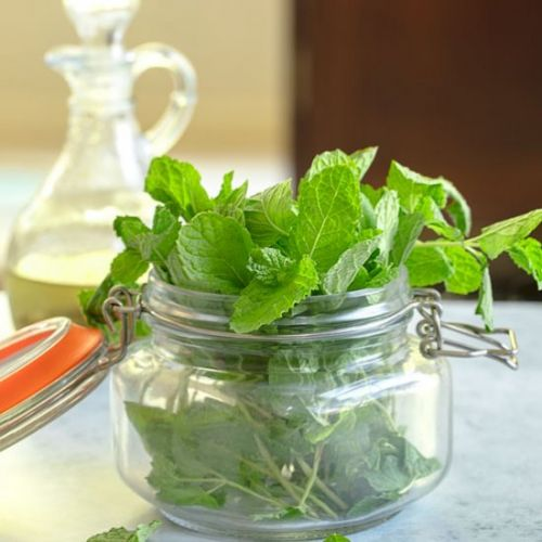 What to make with Fresh Mint
