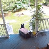 Please Watch as This Giant Bear Gracefully Steals a Chewy Box Off Someone's Front Porch