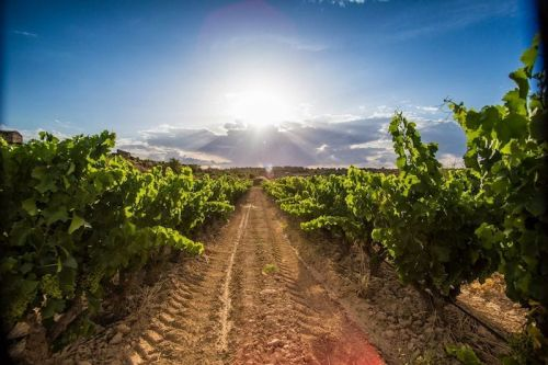 Three Sommeliers on Why They Love Garnacha/Grenache Wines From Europe